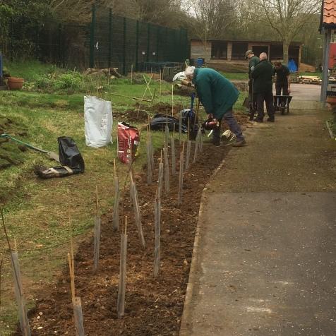 John planting hedge
